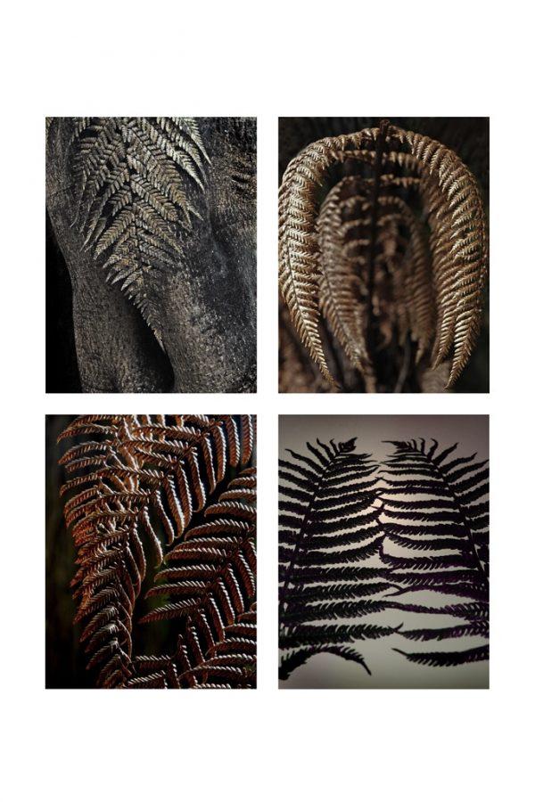 black-fern
